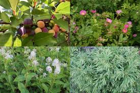 Native Hedges And Hedgerows Beauty And Biodiversity Ecological Landscape Alliance