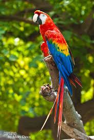 34 macaw wallpapers on wallpapersafari