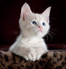10 صور لقطط كيوت جميلة وجديدة عالم القطط