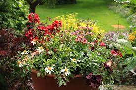 summer bedding plants for baskets
