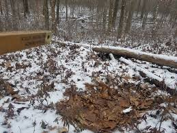 how to create buck bedding areas