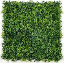 Buy Hedge Walls