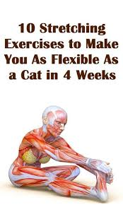 Pin by Abby Sprouse on Good for the body | Stretching exercises, Exercise,  Health fitness