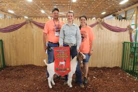 Harrison County junior livestock sale results - Farm and Dairy