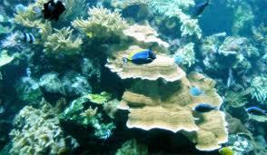 best aquarium and fish live wallpapers