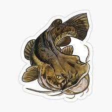 Flathead Catfish Stickers Redbubble