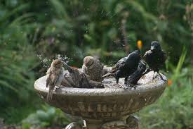 bird baths water for your garden