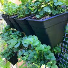 Vertical Garden Wall Buy Wall Garden Living Wall Garden Kits