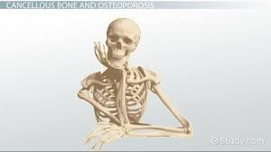 cancellous bone definition structure