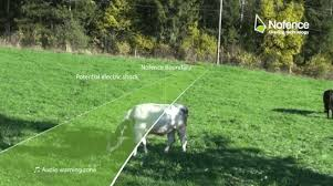 Virtual Fence Keep Livestock In Pasture Without Installing Posts Or Wires On Pasture