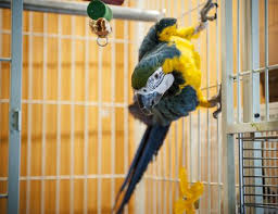 easy and safe bird cage cleaner