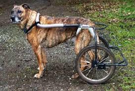diy dog wheelchairs diy cat