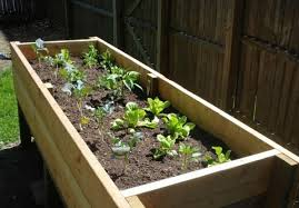 diy project vegetable planter box