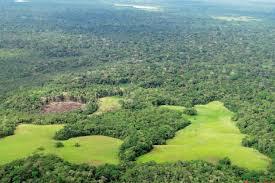 Resultado de imagen para amazonia proyecto de bolsonaro