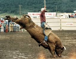 bull riding backgrounds wallpaper cave