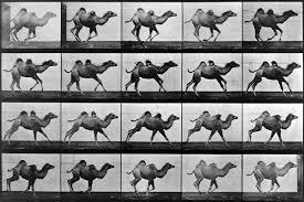 Mastering Motion - The Revolution of Photographer Eadweard Muybridge |  Widewalls