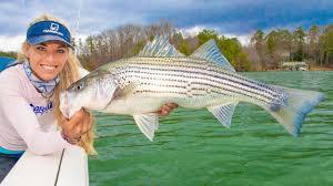 giant striped b fishing on lake
