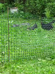 Lessons Learned In Temporary Chicken Fencing Avian Aqua Miser