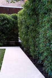 60 Gorgeous Fence Ideas And Designs Renoguide Australian Renovation Ideas And Inspiration Garden Hedges Bamboo Landscape Bamboo Garden