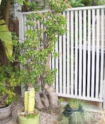 ideas for outdoor privacy screens