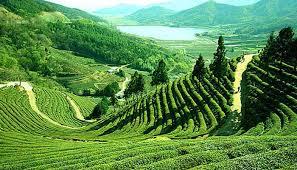Visit Assam - Travel in Assam