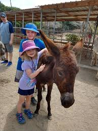 Cole and Ava Roberts adopted Gypsy,... - Donkey Sanctuary Aruba | Facebook