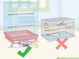 clean and mainn a parakeet cage