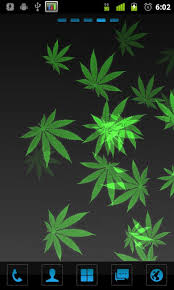 49 live weed wallpapers windows 8 on