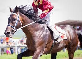Acheter un cheval réformé des courses : 1ère étape la reconversion ...