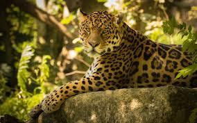 awesome jaguar backgrounds 29227