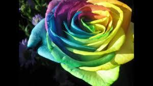 صور اغرب انواع الورود Youtube