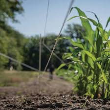 Hooyman Hot Zone Food Plot Protection Fence