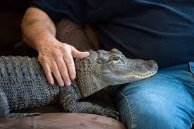 Image result for gator eats dog