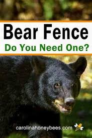 Build The Best Electric Bear Fence Carolina Honeybees