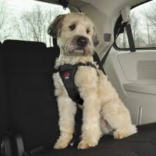 the best dog car seat here