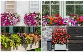 flowers for window boxes in shade