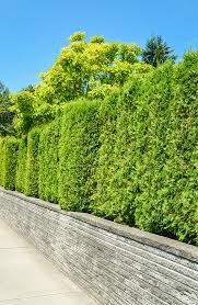 15 Amazing Living Fence Ideas For Your Yard Bees And Roses
