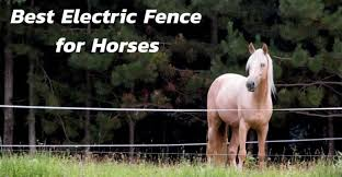 Best Electric Fence For Horses Top Rated Horse Electric Fence Of 2020