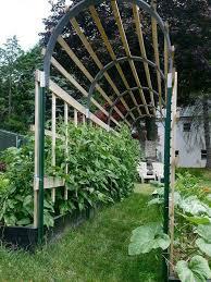 plants tomato trellis garden