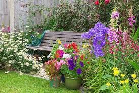 great campanulas for your garden borders