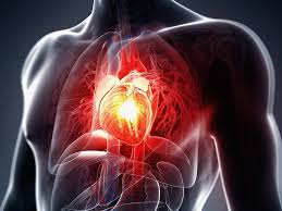 Image result for circulatory system diseases