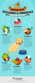 best dog foods our plete guide for