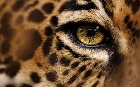 hd jaguar wallpaper 6839771