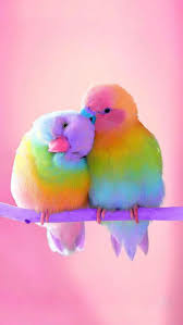 Iphone And Android Wallpapers Colorful Birds Wallpaper For Iphone And Android Colorful Animals Bird Wallpaper Cute Birds
