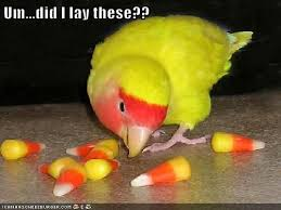 Right Colors, Wrong Shape | Funny bird pictures, Funny birds, Funny animal  pictures