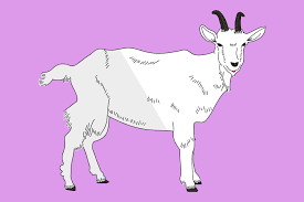 goat puns that aren t so baaaaaaaad if you ve goat the time