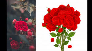 wallpapers images flowers rose profile