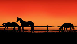 Farm Scene Silhouette Photos Royalty Free Images Graphics Vectors Videos Adobe Stock