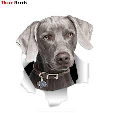 Three Ratels Qd90 Cool Grey Weimaraner Car Sticker Torn Metal Decal Stickers Waterproof 3d Car Styling Pet Dog Decal Buy At A Low Prices On Joom E Commerce Platform