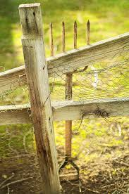 Spading Fork On Chicken Wire Fence Photograph By Yopedro